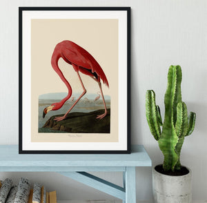 American Flamingo by Audubon Framed Print - Canvas Art Rocks - 1
