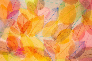 Autumn background Wall Mural Wallpaper - Canvas Art Rocks - 1