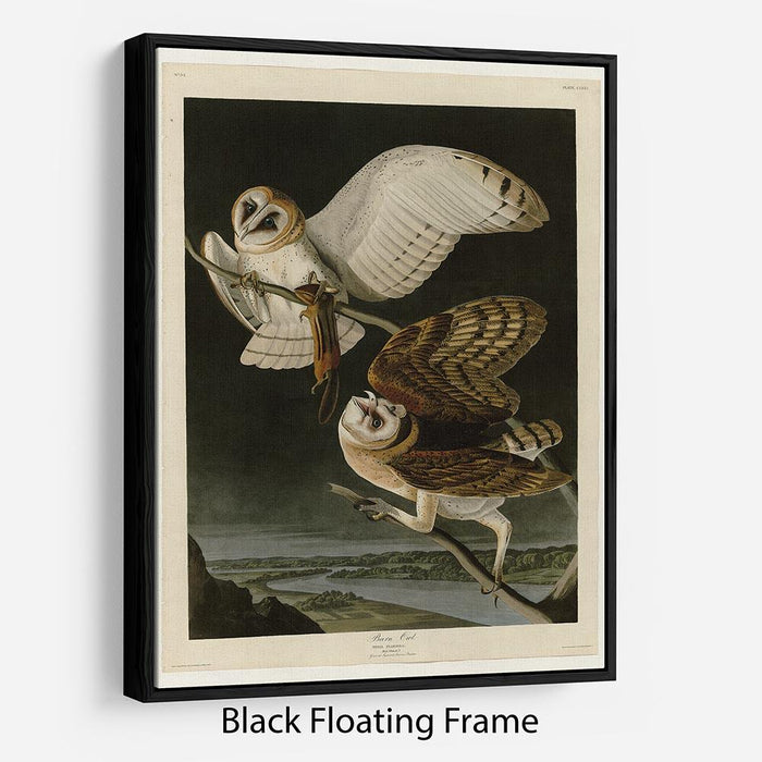Barn Owl by Audubon Floating Frame Canvas