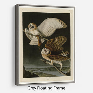 Barn Owl by Audubon Floating Frame Canvas - Canvas Art Rocks - 3