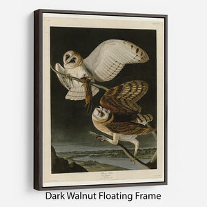 Barn Owl by Audubon Floating Frame Canvas - Canvas Art Rocks - 5