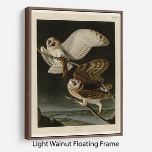 Barn Owl by Audubon Floating Frame Canvas - Canvas Art Rocks 7