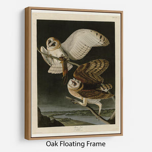 Barn Owl by Audubon Floating Frame Canvas - Canvas Art Rocks - 9