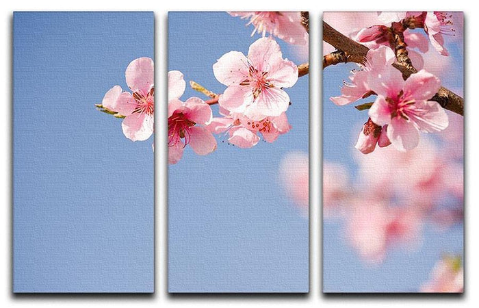 Beautiful colorful fresh spring flowers 3 Split Panel Canvas Print