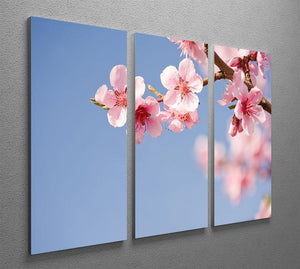 Beautiful colorful fresh spring flowers 3 Split Panel Canvas Print - Canvas Art Rocks - 2