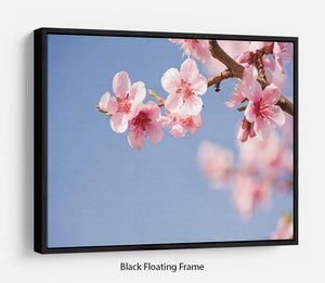 Beautiful colorful fresh spring flowers Floating Frame Canvas