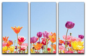 Beautiful coloured flowers 3 Split Panel Canvas Print - Canvas Art Rocks - 1