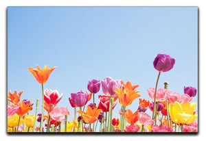 Beautiful coloured flowers Canvas Print or Poster  - Canvas Art Rocks - 1