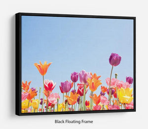 Beautiful coloured flowers Floating Frame Canvas