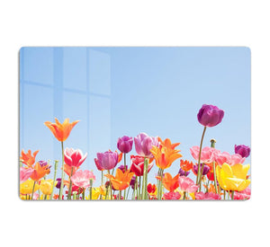 Beautiful coloured flowers HD Metal Print