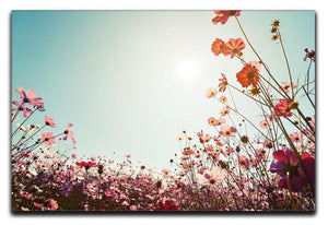 Beautiful cosmos flower field Canvas Print or Poster  - Canvas Art Rocks - 1