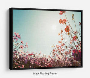 Beautiful cosmos flower field Floating Frame Canvas