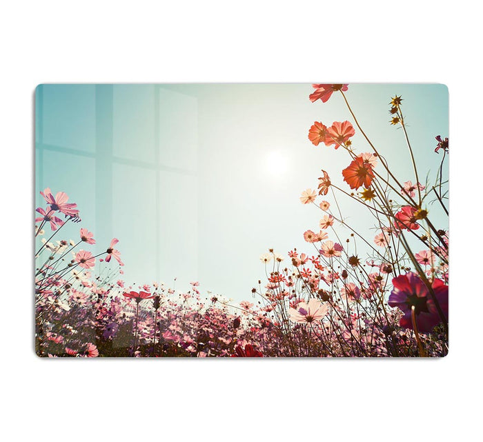 Beautiful cosmos flower field HD Metal Print