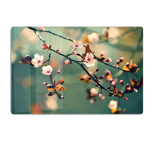 Beautiful flowering Japanese cherry HD Metal Print