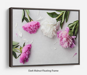 Beautiful pink and white peony flowers Floating Frame Canvas