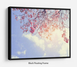 Beautiful tree pink flower in spring Floating Frame Canvas