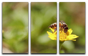 Bee and small sunflower 3 Split Panel Canvas Print - Canvas Art Rocks - 1