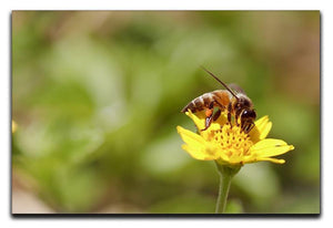Bee and small sunflower Canvas Print or Poster  - Canvas Art Rocks - 1