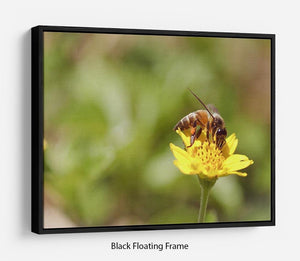 Bee and small sunflower Floating Frame Canvas
