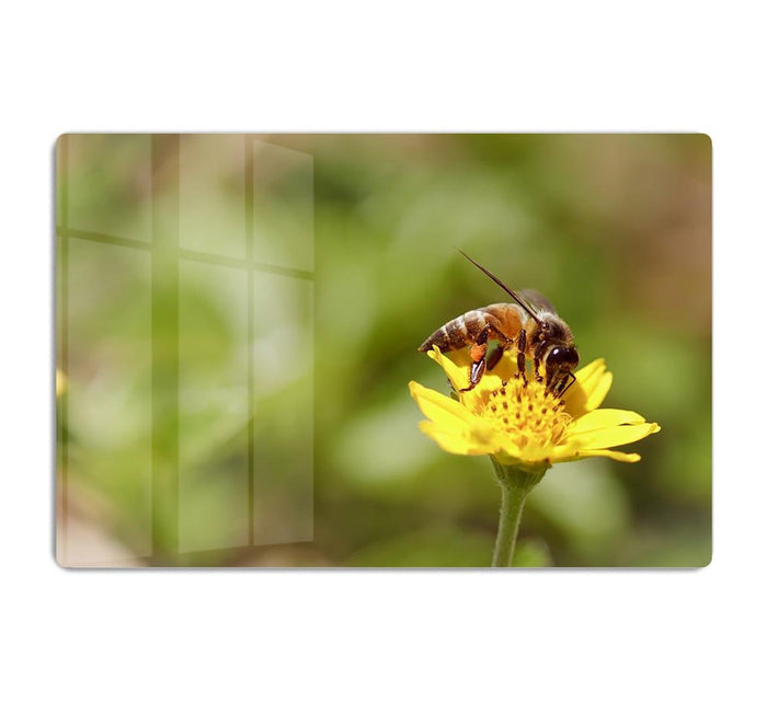 Bee and small sunflower HD Metal Print