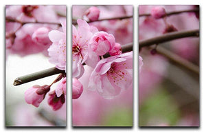 Broken blooming cherry branch 3 Split Panel Canvas Print - Canvas Art Rocks - 1