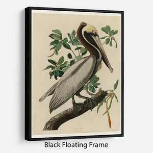 Brown Pelican 2 by Audubon Floating Frame Canvas - Canvas Art Rocks - 1