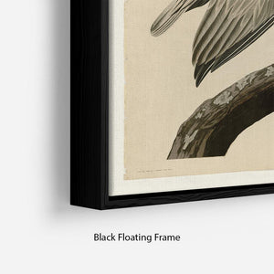 Brown Pelican 2 by Audubon Floating Frame Canvas - Canvas Art Rocks - 2