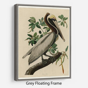 Brown Pelican 2 by Audubon Floating Frame Canvas - Canvas Art Rocks - 3