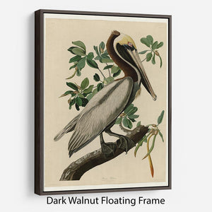 Brown Pelican 2 by Audubon Floating Frame Canvas - Canvas Art Rocks - 5