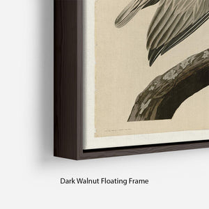 Brown Pelican 2 by Audubon Floating Frame Canvas - Canvas Art Rocks - 6
