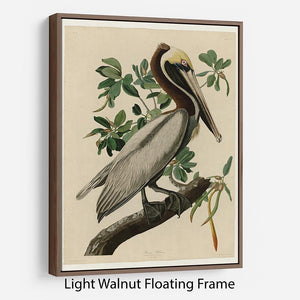 Brown Pelican 2 by Audubon Floating Frame Canvas - Canvas Art Rocks 7