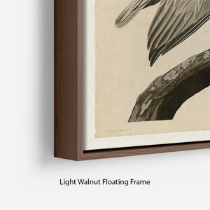 Brown Pelican 2 by Audubon Floating Frame Canvas - Canvas Art Rocks - 8