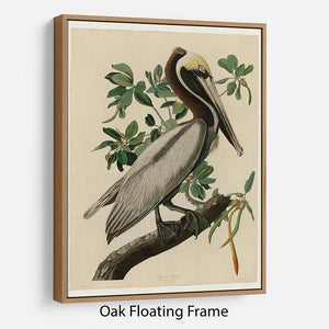 Brown Pelican 2 by Audubon Floating Frame Canvas - Canvas Art Rocks - 9