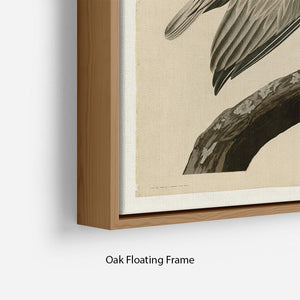 Brown Pelican 2 by Audubon Floating Frame Canvas - Canvas Art Rocks - 10