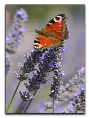 Butterfly on Lavender Canvas Print or Poster - Canvas Art Rocks - 1