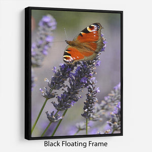 Butterfly on Lavender Floating Frame Canvas - Canvas Art Rocks - 1