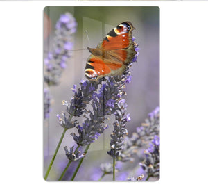 Butterfly on Lavender HD Metal Print - Canvas Art Rocks - 1