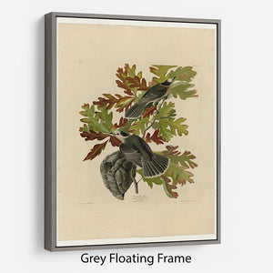 Canada Jay by Audubon Floating Frame Canvas - Canvas Art Rocks - 3