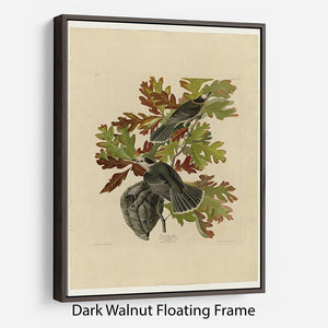 Canada Jay by Audubon Floating Frame Canvas - Canvas Art Rocks - 5