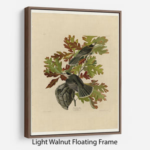 Canada Jay by Audubon Floating Frame Canvas - Canvas Art Rocks 7