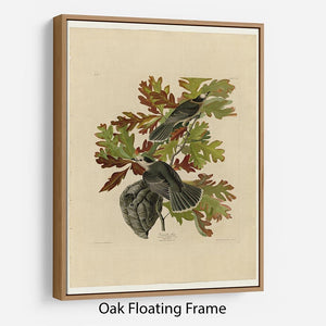 Canada Jay by Audubon Floating Frame Canvas - Canvas Art Rocks - 9