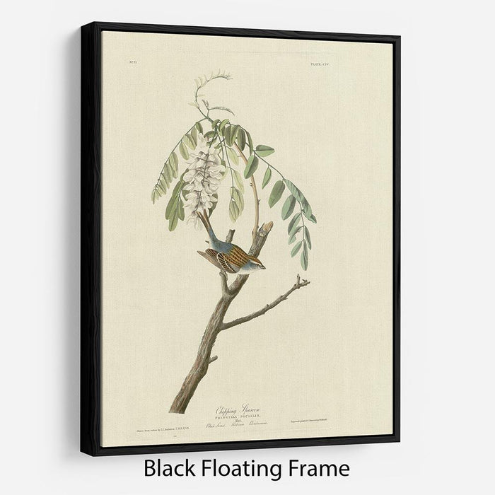 Chipping Sparrow by Audubon Floating Frame Canvas