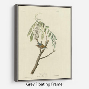 Chipping Sparrow by Audubon Floating Frame Canvas - Canvas Art Rocks - 3