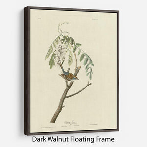 Chipping Sparrow by Audubon Floating Frame Canvas - Canvas Art Rocks - 5