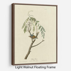 Chipping Sparrow by Audubon Floating Frame Canvas - Canvas Art Rocks 7