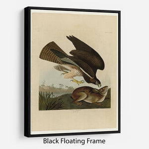 Common Buzzard by Audubon Floating Frame Canvas - Canvas Art Rocks - 1