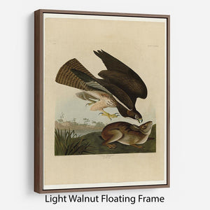 Common Buzzard by Audubon Floating Frame Canvas - Canvas Art Rocks 7
