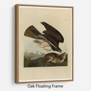 Common Buzzard by Audubon Floating Frame Canvas - Canvas Art Rocks - 9