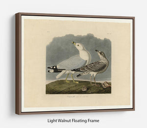 Common Gull by Audubon Floating Frame Canvas - Canvas Art Rocks 7