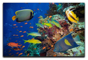 Coral Reef on Red Sea Canvas Print or Poster  - Canvas Art Rocks - 1